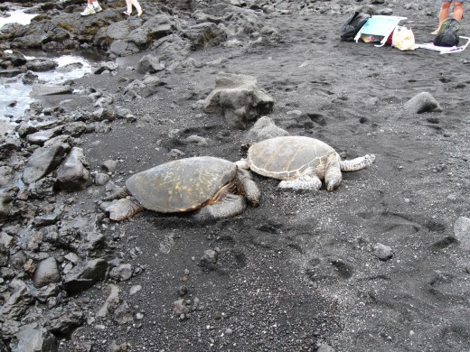 Two turtles resting together in the sand.