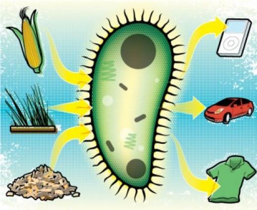 BioPlastic Application Areas