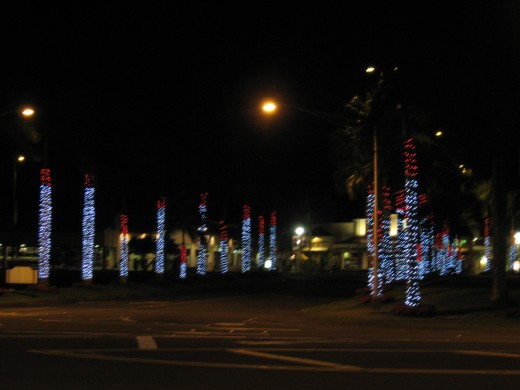 decorated palm trees