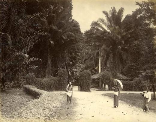 Peradeniya Garden Entrance