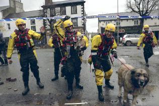 RSOCA inspectors help rescue dogs