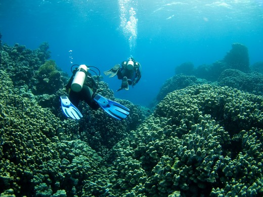 Bimini is an amazing dive and snorkel site.