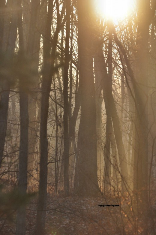 Fog in the woods this morning made for an eerie start to the day.