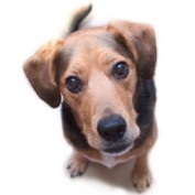 Adopt-a-Dog profile image