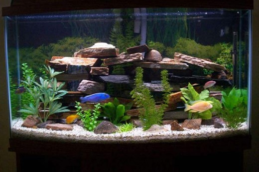 1000 images about aquariums and fish on pinterest for African cichlid tank decoration