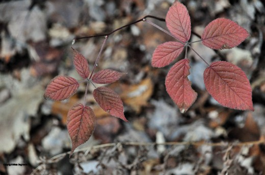 A few plants are clinging to their leaves, though they've turned a rusty, dusky red.