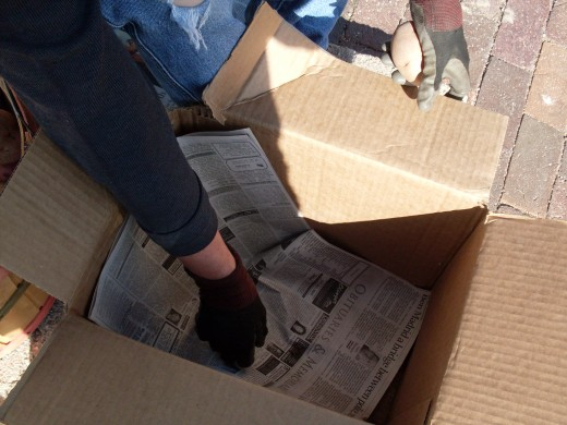 Prepare boxes by spreading a few sheets of newspaper in the bottom.