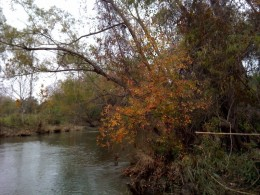A view of Brush Creek in Round Rock, Texas.