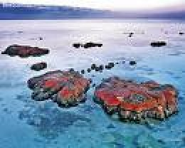 Living Stromatolites.  A living fossil formed by algae first seen in the fossil record as dating back 31/2 billion years.  Earth's oldest fossil and living creature(s)  scienceblogs.co.photo
