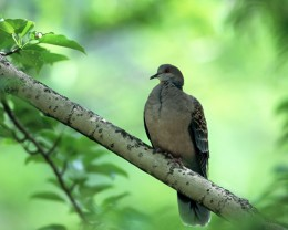 A Turtle Dove Healed and Freed.  A new Sonnet by Poet Michael L Maxwell