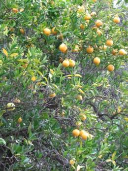 Love those oranges