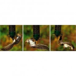 Buy a Yankee Flipper Squirrel Proof Bird Feeder