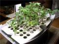 The AeroGarden Garden Starter Tray Kit