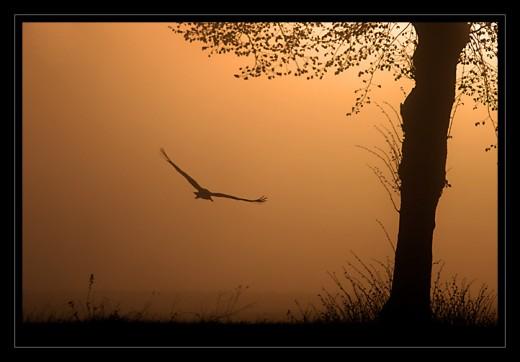 i an eagle