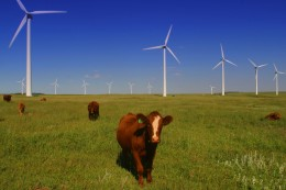 Beef and wind power -- southern Alberta