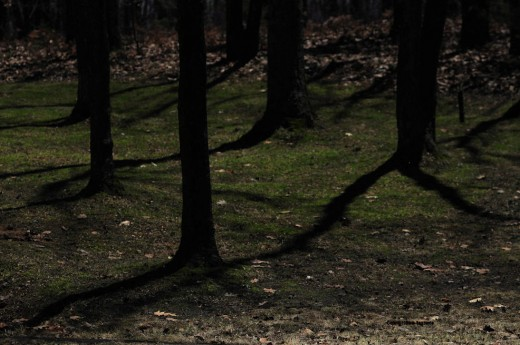 Moonlight cast long shadows on oaks in the upper yard making them appear almost like running figures. Ents?