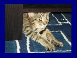 Freya likes to sleep underneath things...