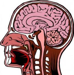 Brain Power Stengthening - Brain Health