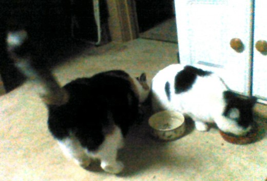 This isn't what it looks like. There's a food dish behind Valentine's behind...
