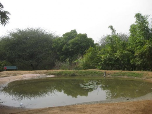 Natural water pond surrounded by green trees