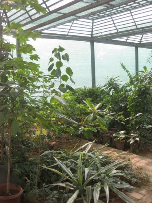 In-side tropical Nursery  1