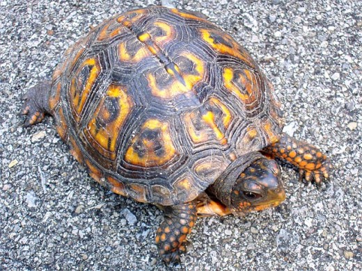 Pulling into its shell works well for turtles, but is not emotionally healthy for us.