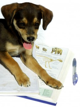 Your dog can't do his own homework, so he needs you to do it for him!