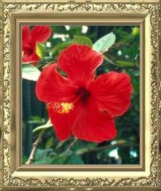 Orlando Natural Beauty