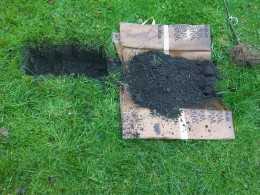 Remove and disgard all turf and weeds before digging.