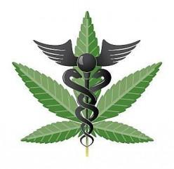 Legalizing Medical Marijuana