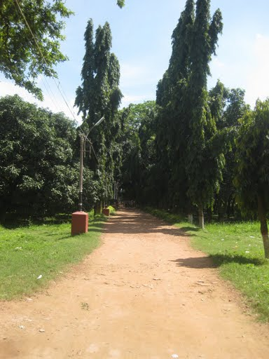 Lash green pathway of the Jain temple is example of forestation