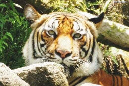 Photo By: http://www.flickr.com/photos/niznoprob/
