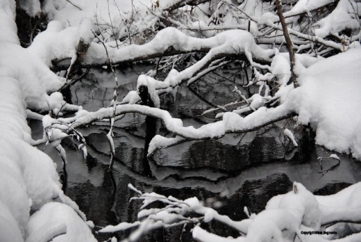 The tangle of branches in the creek take on a different look covered with snow.