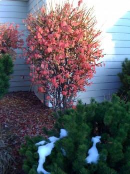 Colorfull Denver in Fall.