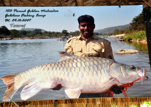 Tomraj with his own, much more impressive, Mahseer. I beg to differ with the label. To me this is also a Humpback