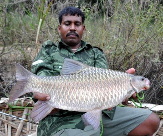 Tomraj with my Carnatic Carp. It took chicken guts and fought well