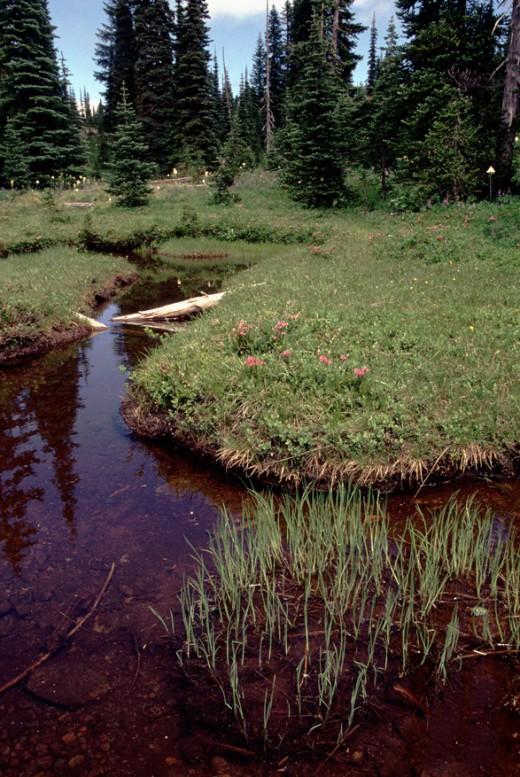 Pond near Sand Lake.
