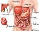 irritable-bowel-syndrome.com