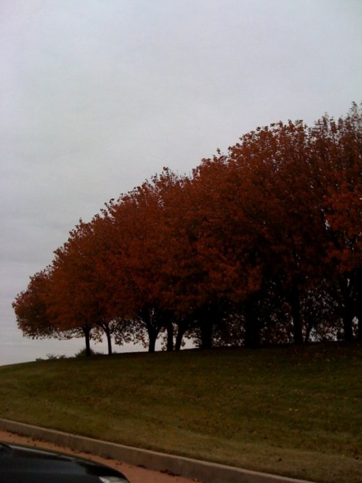 A large group of colorful Fall trees accenting an office area.