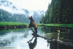 What a veiw for a hunting bear