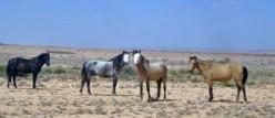 Animal Stewardship and Humane Treatment