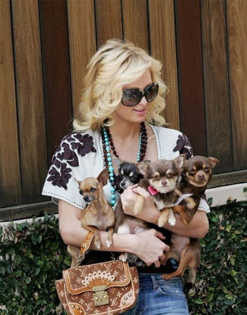 Paris Hilton: Hoarder, Abusive, or Just Stupid?