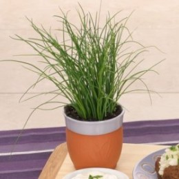 I like to keep my Chives growing in the kitchen.