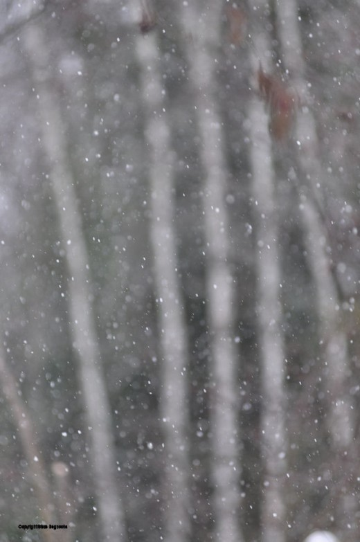 Snow falls heavily moments after the solstice at 12:47 p.m. EST.