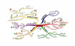 Creating Your First Mind Map