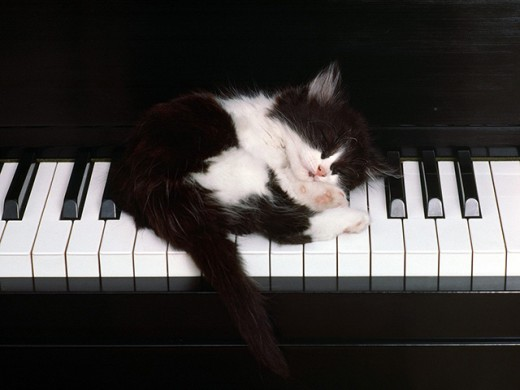 Too much playing piano makes any cat tired