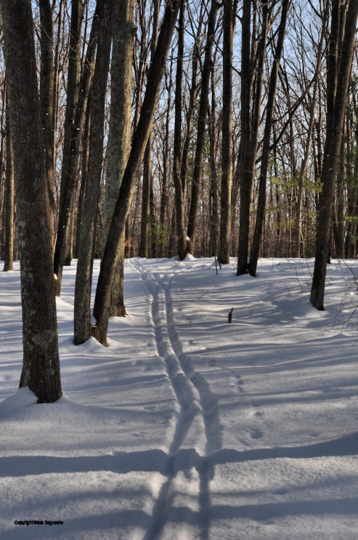 By day, the sun cast long shadows intersecting my ski trail in the upper yard.