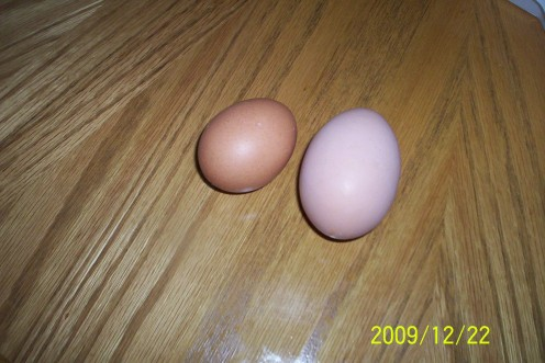 My Hen Said ouch when she laid this huge egg.