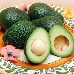 Avocado Diseases Pictures