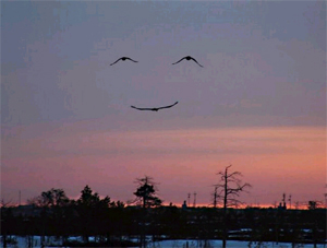Smiles in the Sky